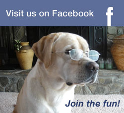 Visit Us On Facebook