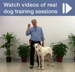 Watch Videos of Real Dog Training Sessions